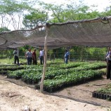 AJAASSPIB Pico Bonito Reforestation Greenhouse