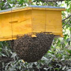 Beehive in Kenya. Photo courtesy of John Recha/ERMCSD