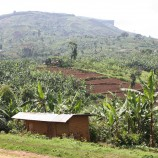 Terraced hillslopes in Uganda. Photo by Seth Shames/EcoAgriculture Partners.