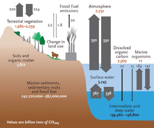 The global carbon cycle. Source: Scherr and Sthapit 2009a, illustrated by Joan A. Wolbier.