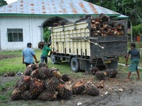 Palm oil is loaded into a truck in Indonesia. Photo by Lee Gross, EcoAgriculture Partners.