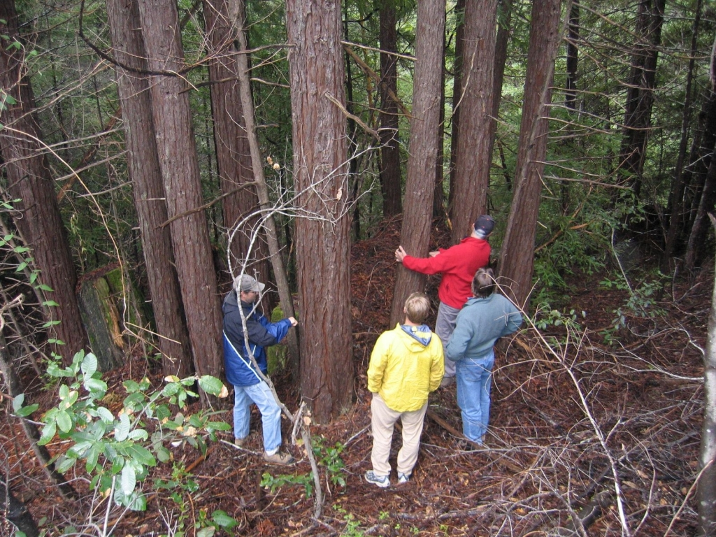 Measuring trees in a second growth forest in Northern California, USA. Photo by Courtney Wallace.
