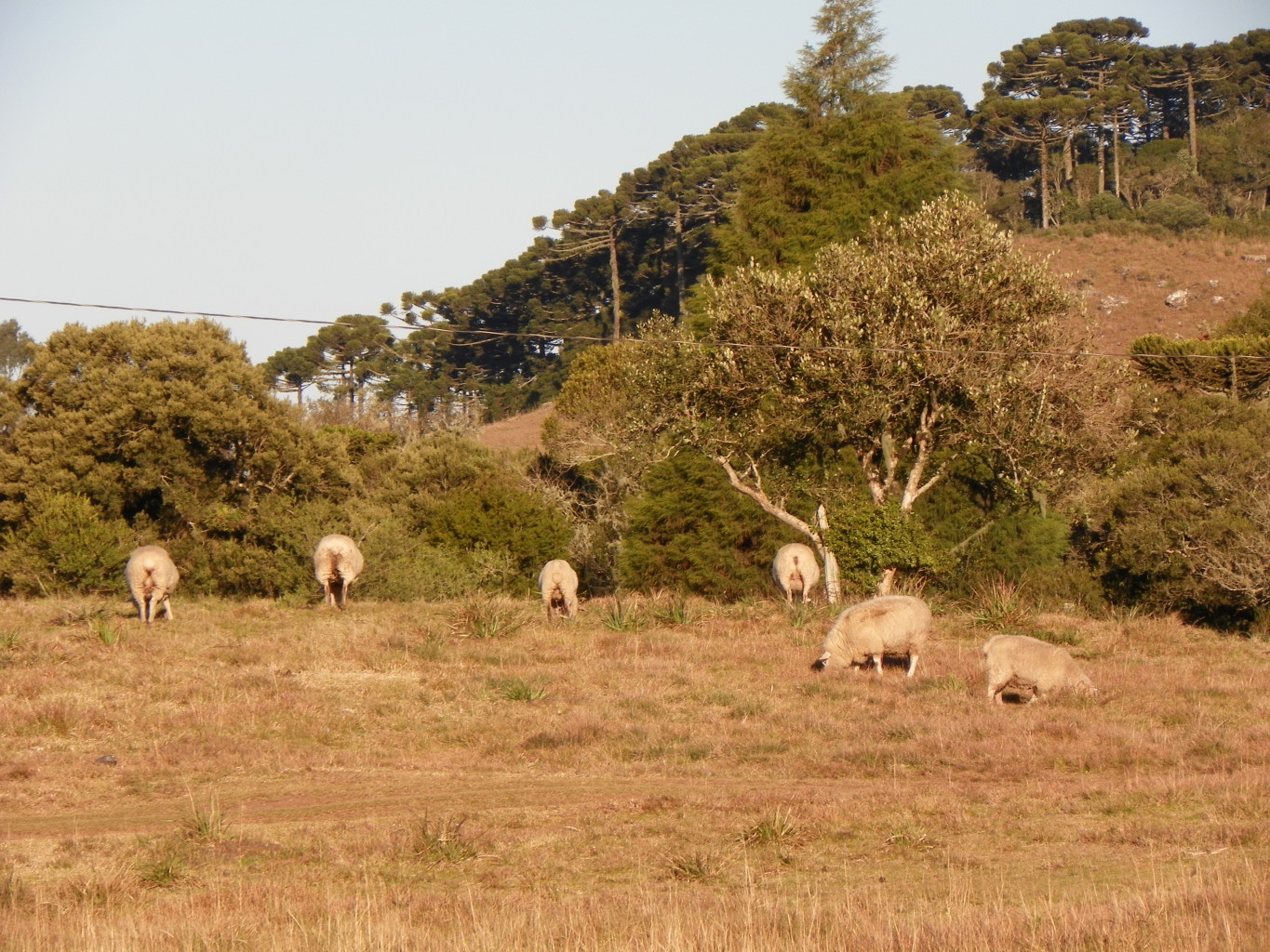 Typical sheep breeding in the region. Photo by Francine Schulz.