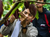 Counting Cocoa Pods. Photo by William Crosse, Rainforest Alliance.